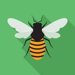 Bee  flat icon on isolated transparent background.