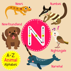 N letter tracing. Narwhal. Newfoundland. Newt. Nightingale. Numbat. Cute children zoo alphabet flash card. Funny cartoon animal. Kids abc education. Learning English vocabulary. Vector illustration.