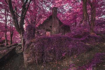Spookachtig oud vervallen vervallen gebouw in dik surrealistisch bosland