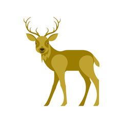 Illustration of reindeer in modern flat design. Isolated on white background. Vector deer eps10