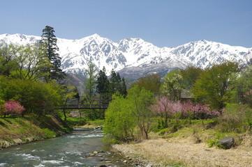 白馬村・大出公園の桜と白馬三山