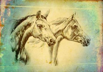 freehand horse head art illustration