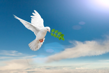 Canvas Print - White Dove carrying leaf branch