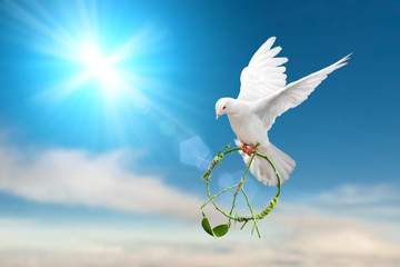 Foto En Lienzo - white dove holding green branch in peace sign shape flying on blue sky