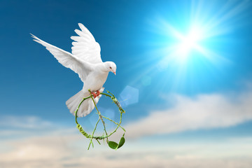 white dove holding green branch in peace sign shape