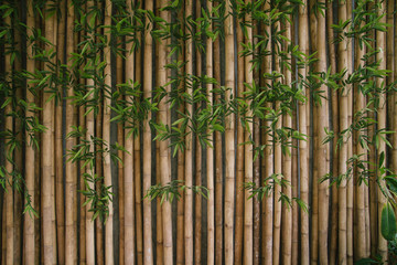 Bamboo fence background,vintage picture style