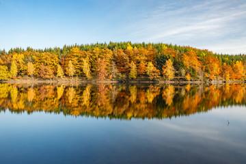 Spiegelungen am Frankenteich im Südharz im Herbst