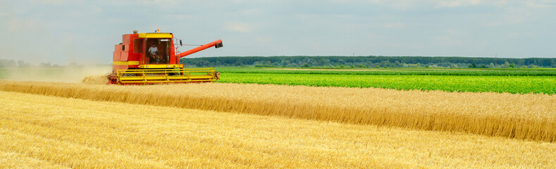 Harvester combine harvesting wheat in summer Wall mural
