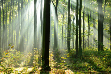 Wall Murals Forest Beautiful morning in the forest