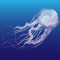 jellyfish, vector, hand drawn