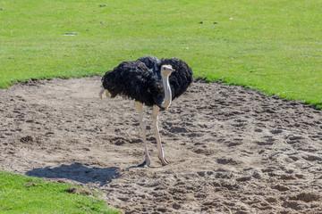 big ostrich in his bathtub