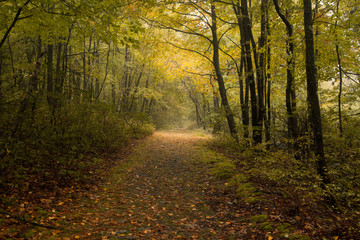 Walking in the Forest of Autumn Leaves