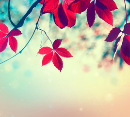Wall Mural - Colorful autumn leaves over blurred nature background. Fall