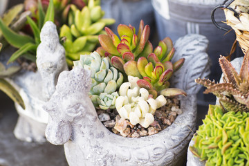 Fresh flowers are in the clay pot. Decoration for home and garden made of different cactuses.