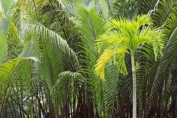 Coconut palm trees on green background