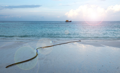 beach  nature  white sand, seawater Sai Beach Koh LIPE in Thaila