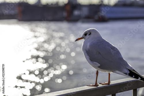 Möwe Am Hamburger Hafen Stockfotos Und Lizenzfreie Bilder Auf