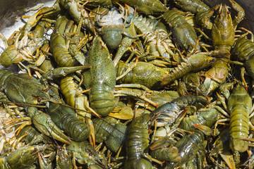 Background  of live crawfish