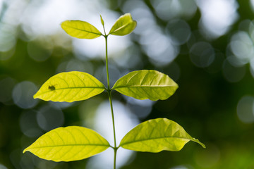 Top leaves from trees and green bokeh blur background