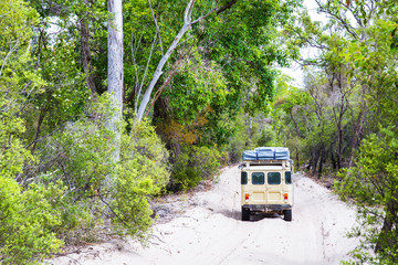 Sand road throught the Satinay Forest, Fraser Island