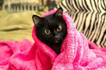 black cat wrapped in a warm bathrobe
