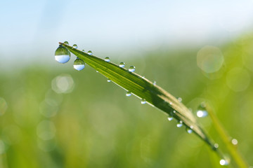 Dewdrops on grass Wall mural