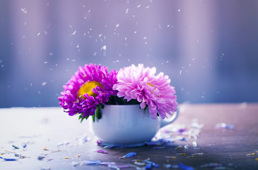 Pink aster flowers in a vase
