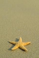 Starfish on perfect beach