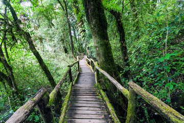 Beautiful rain forest at Angka nature trail in Doi Inthanon national park, Thailand,soft focus.