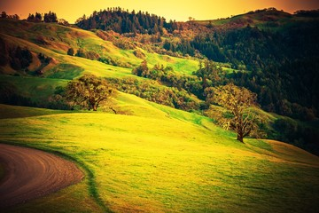 Wall Mural - Northern California Countryside