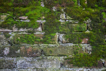 Old brick wall construction covered in green moss