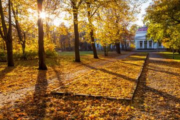 Golden autumn in city park