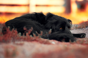 Mongrel dog lies on the ground