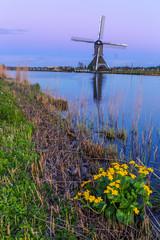 Wall Mural - Windmühlen bei Kinderdijk