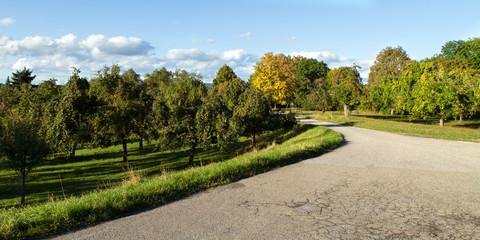 Apfelbäume Heutensbach