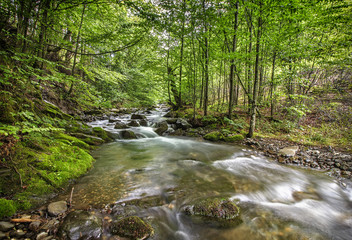 beautiful long exposure view of small river in green forest