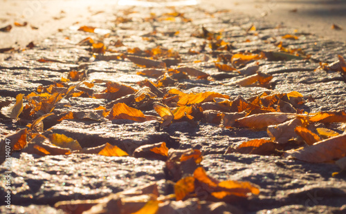 Bunte bl tter am boden herbst stock photo and royalty for Boden herbst 2016