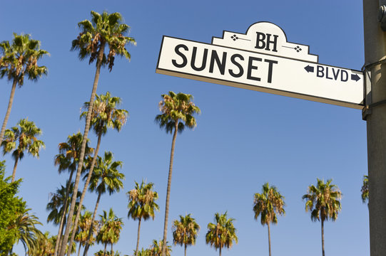 Sunset Boulevard street sign with palm trees in the background