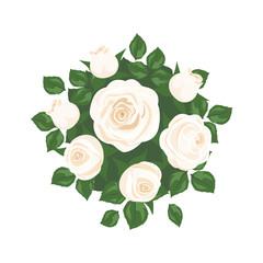 white roses on white background. roses card