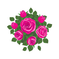 pink roses  on white background. roses card