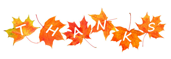 Happy Thanksgiving Day. Autumn leaves with text isolated on white