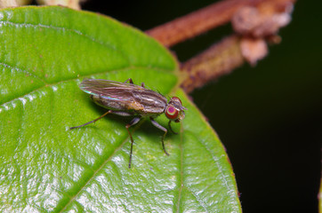 Fly insect in the garden