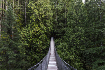 Suspension bridge in the forest. Evergreen. Vancouver nature. Pacific north west. Nature. Vancouver landscape. Wall mural