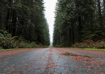 Fotomurales - Road in the forest. Pacific North West, Vancouver British Columbia Canada. Straight road with evergreen trees on both sides.