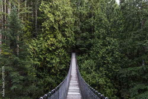 Wall mural Suspension bridge in the forest. Evergreen. Vancouver nature. Pacific north west. Nature. Vancouver landscape.