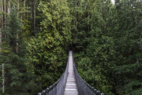 Foto em tela Suspension bridge in the forest. Evergreen. Vancouver nature. Pacific north west. Nature. Vancouver landscape.