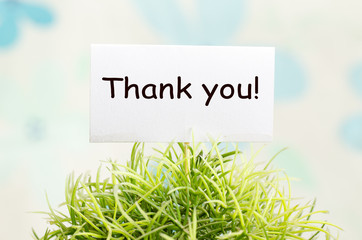 Decorative plant in pot with thank you card