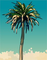 cartoon drawn tall sprawling decorative palm tree