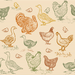 Farm birds seamless pattern vintage engraving style