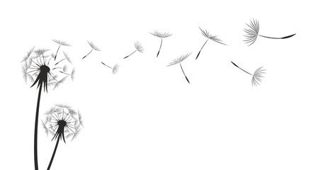 Obraz Flower field dandelion.  - fototapety do salonu